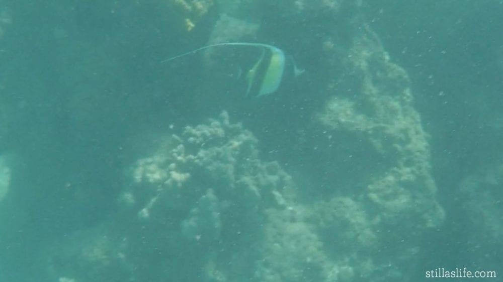 An angel fish near the beach