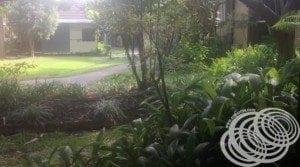 Mercure Darwin Airport Resort Gardens from Room 210