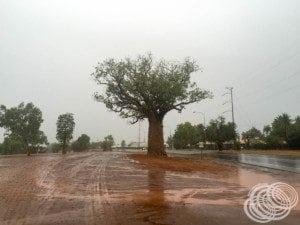 Rain, mud and a boab tree at Kununurra