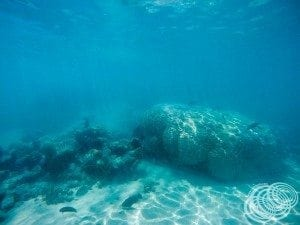 The beautiful coral as soon as you hop in the water.
