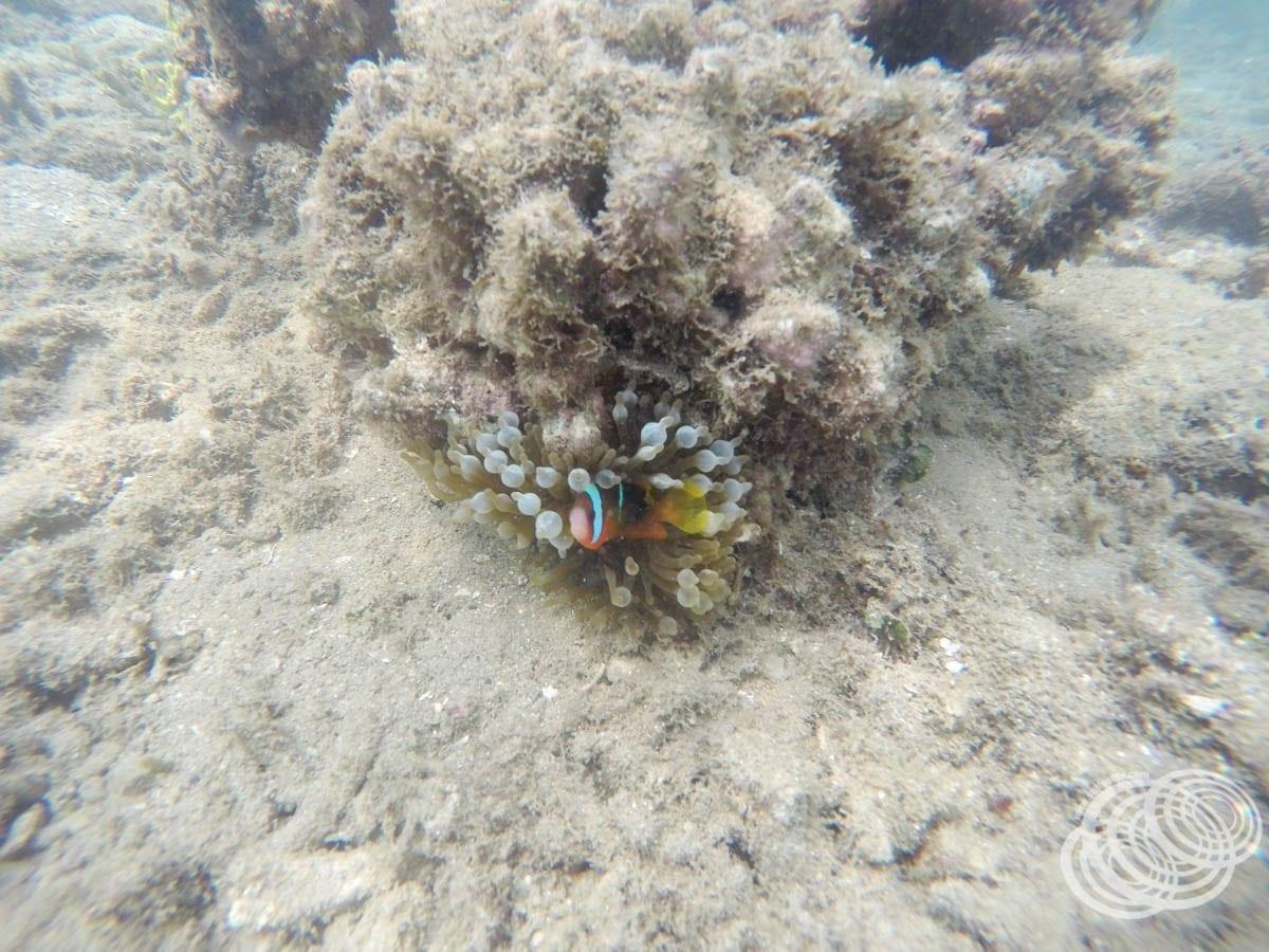¡Encontré a Nemo!