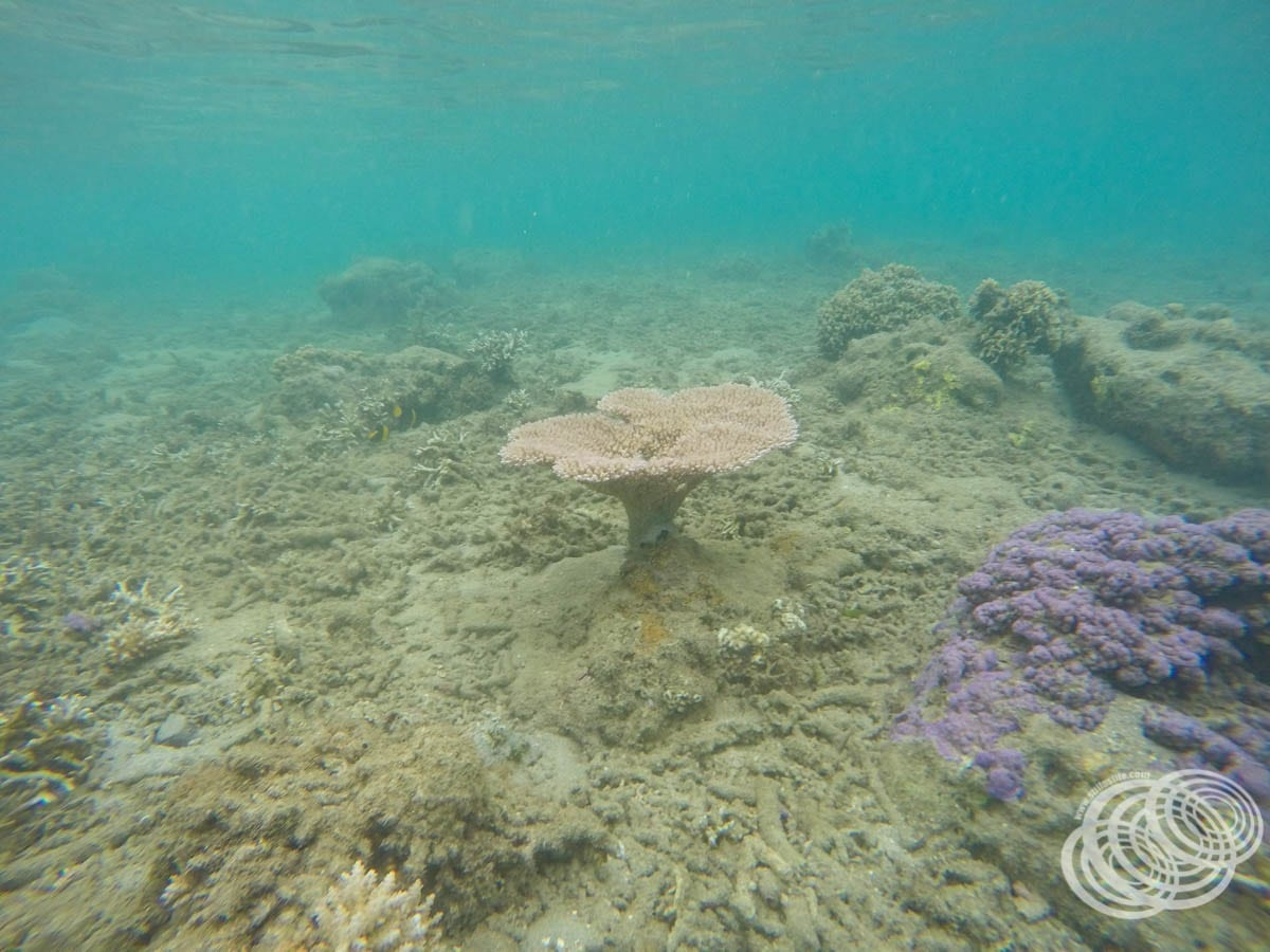 You don't often get to be this close to such perfectly formed, undamaged coral like this.