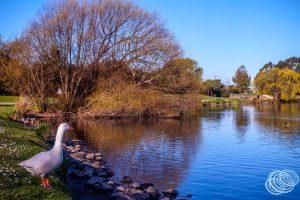 Henley Lake Park Masterton